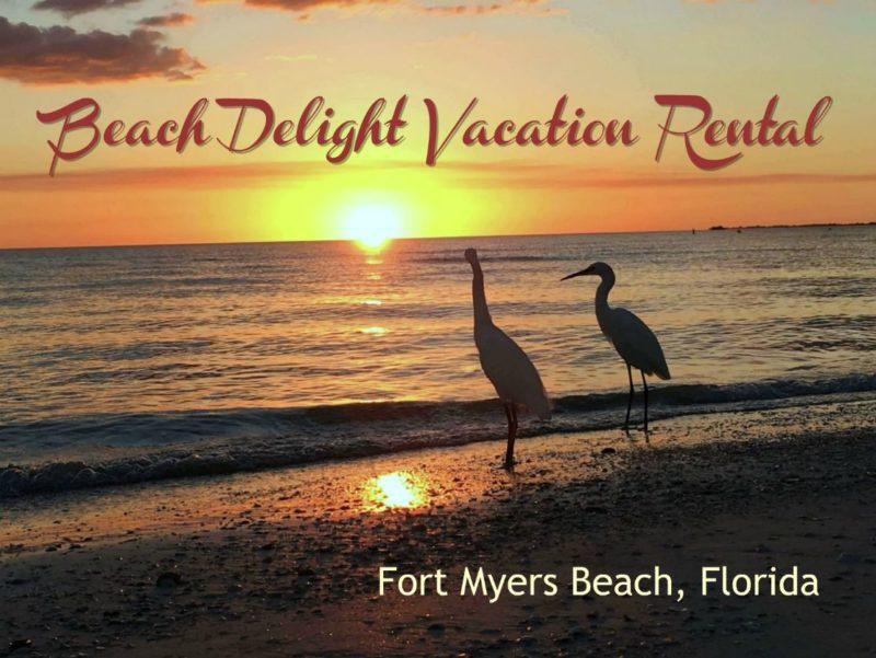 Birds on Fort Myers Beach, Florida