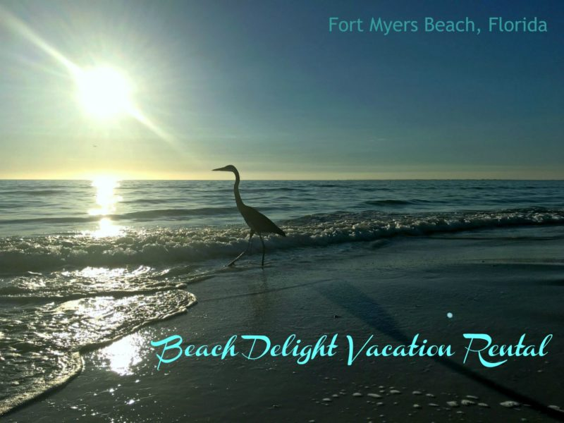Heron and the sun on Fort Myers Beach, Florida
