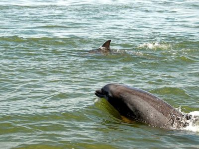 Dolphins Close to Shore