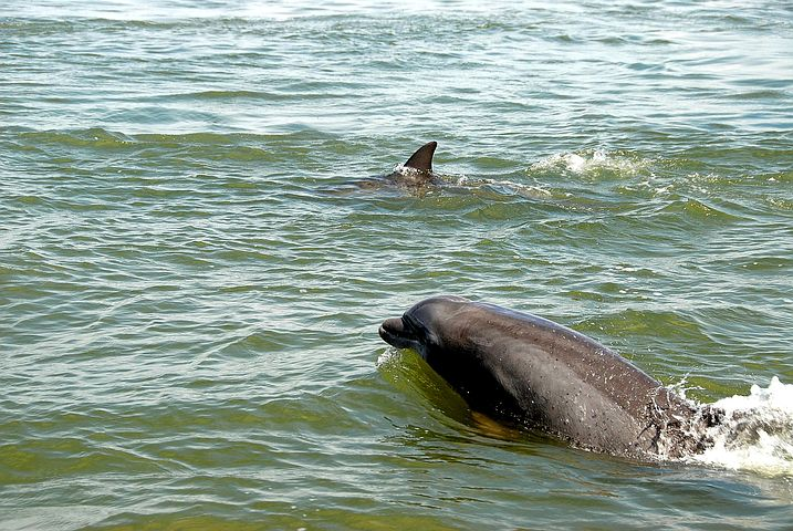 See dolphins along Fort Myers Beach, Florida