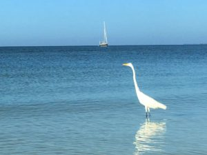 Sailboat and Heron