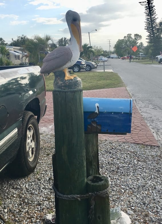 Pelican on Mailbox Post