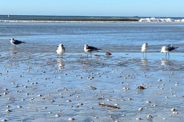 Birds at Low Tide