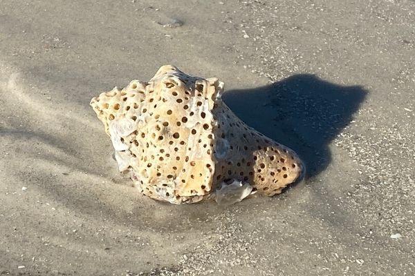 Holey Shell