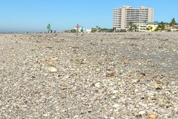 Lots of Shells on the Beach
