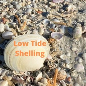 Low Tide Shelling