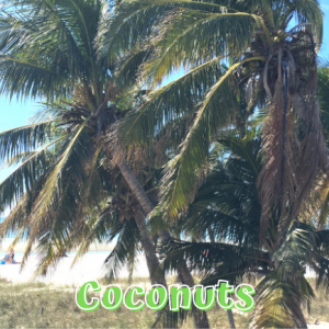 Coconut Collecting