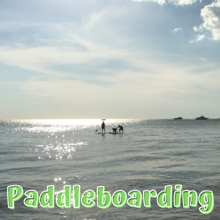Paddleboard on the Gulf of Mexico